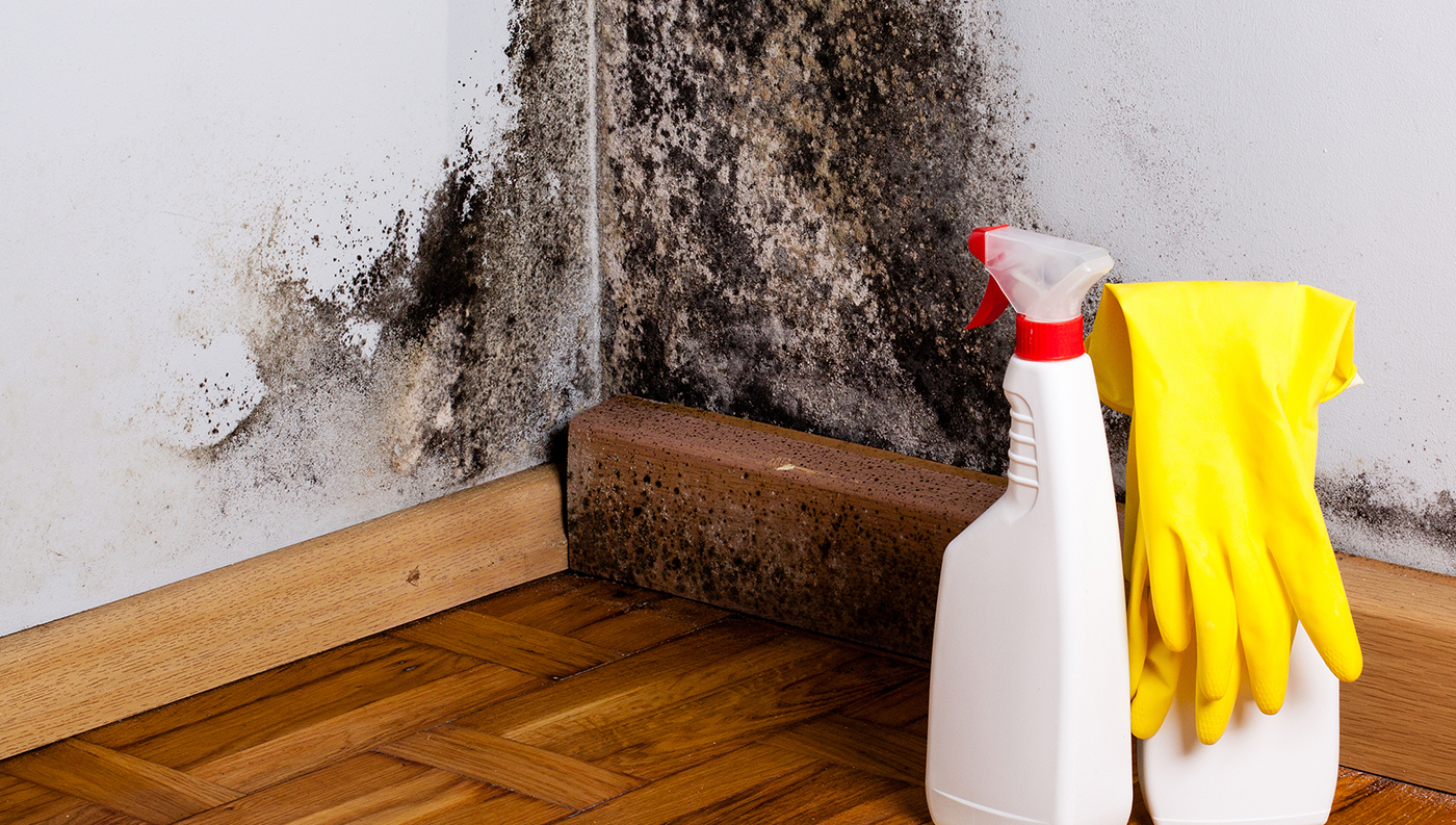 Mold cleaning essentials.