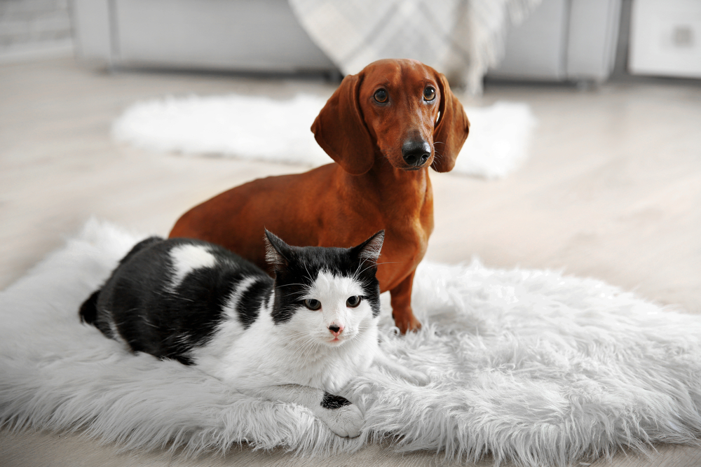 The Secret To Pet Proofing Your Apartment Area Rugs
