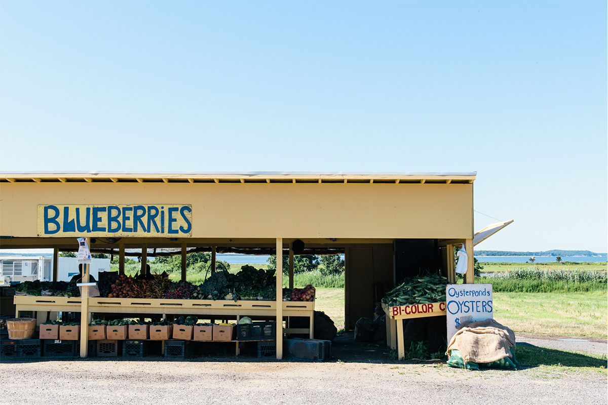 image of blueberry stand on north fork of long island