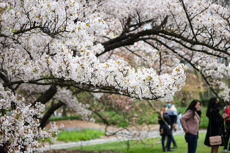 best gardens in nyc Brooklyn Botanic Garden in the spring.