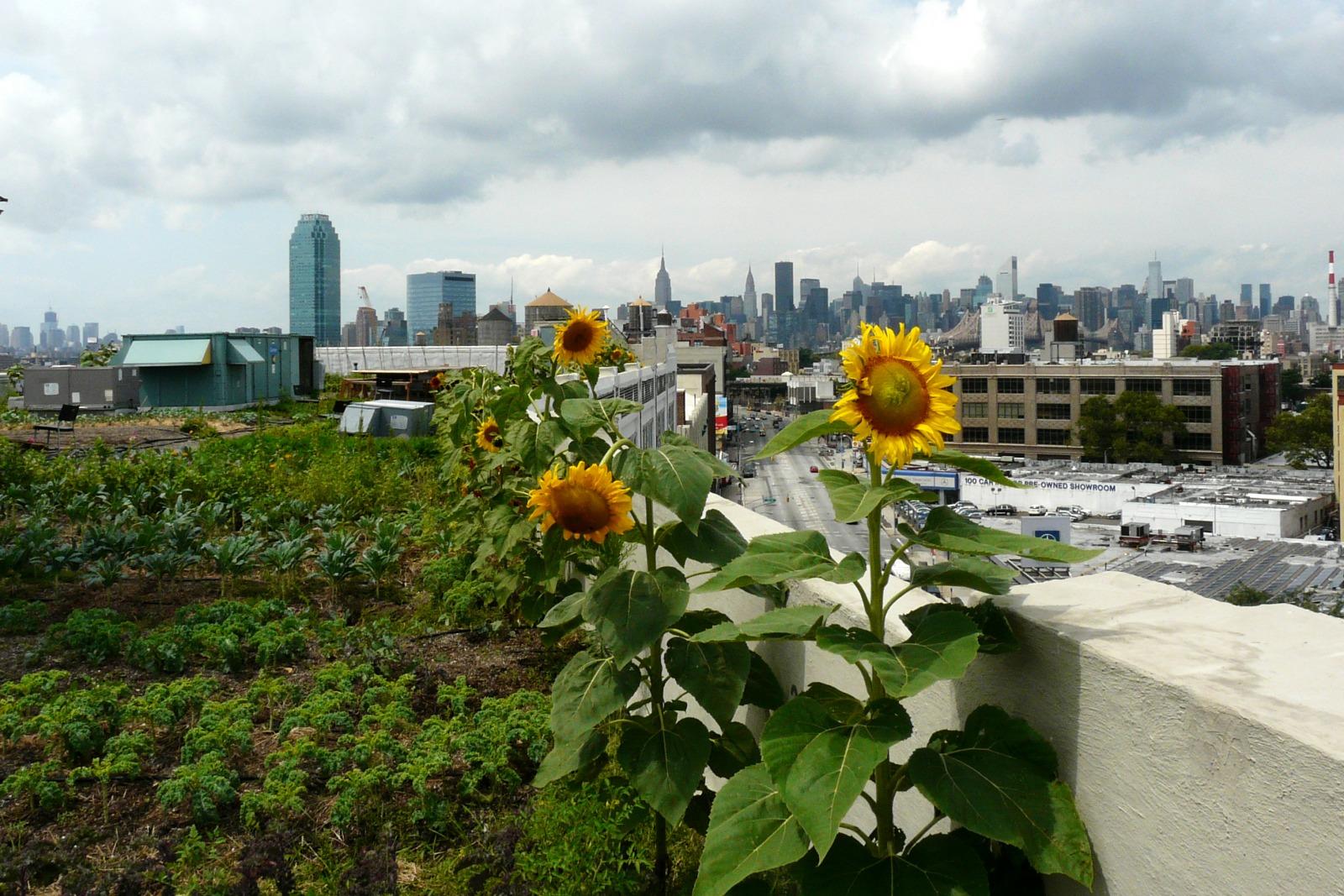 Rooftop Garden at Brooklyn Grange