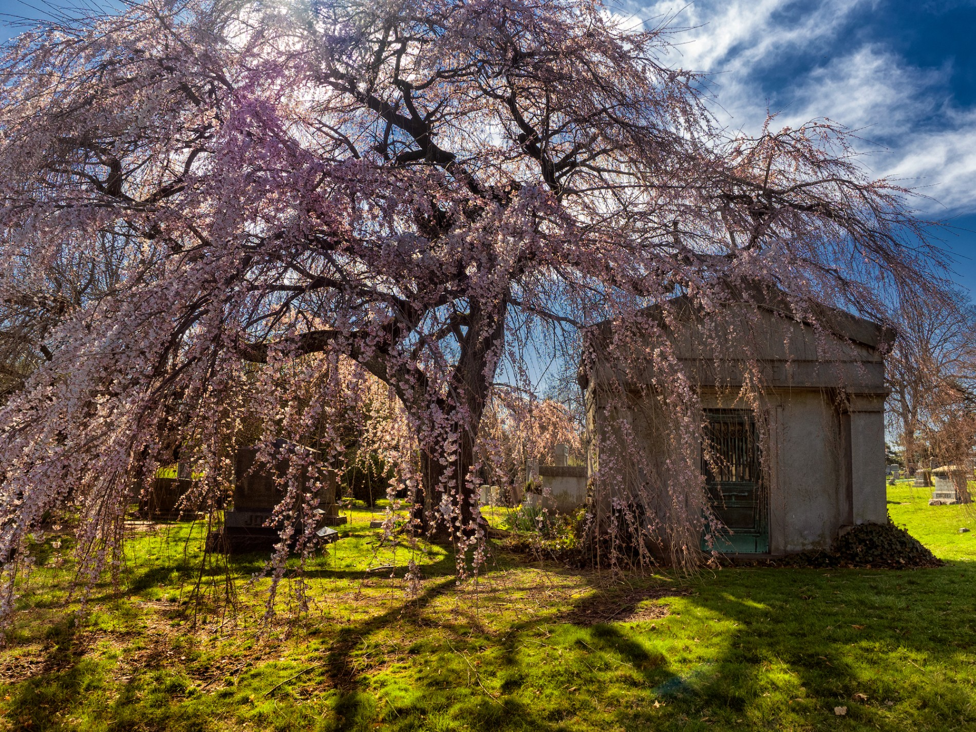 century-and-a-half-old trees, glacial ponds, and foot paths in Green-Wood Cemetery.