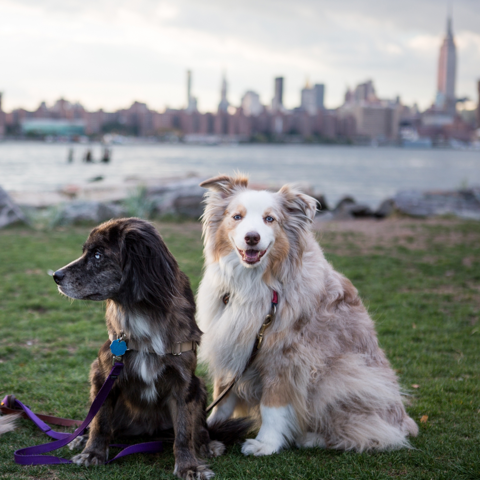 NYC Dog Parks: The 8 Best, Across All 5 Boroughs | StreetEasy