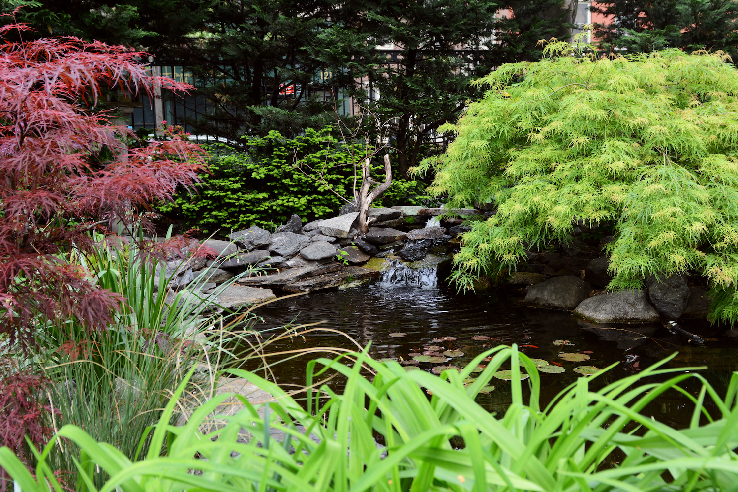 best gardens in NYC Jefferson Market Garden and its lily pond