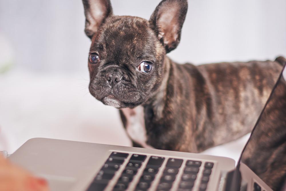 dog looking at computer