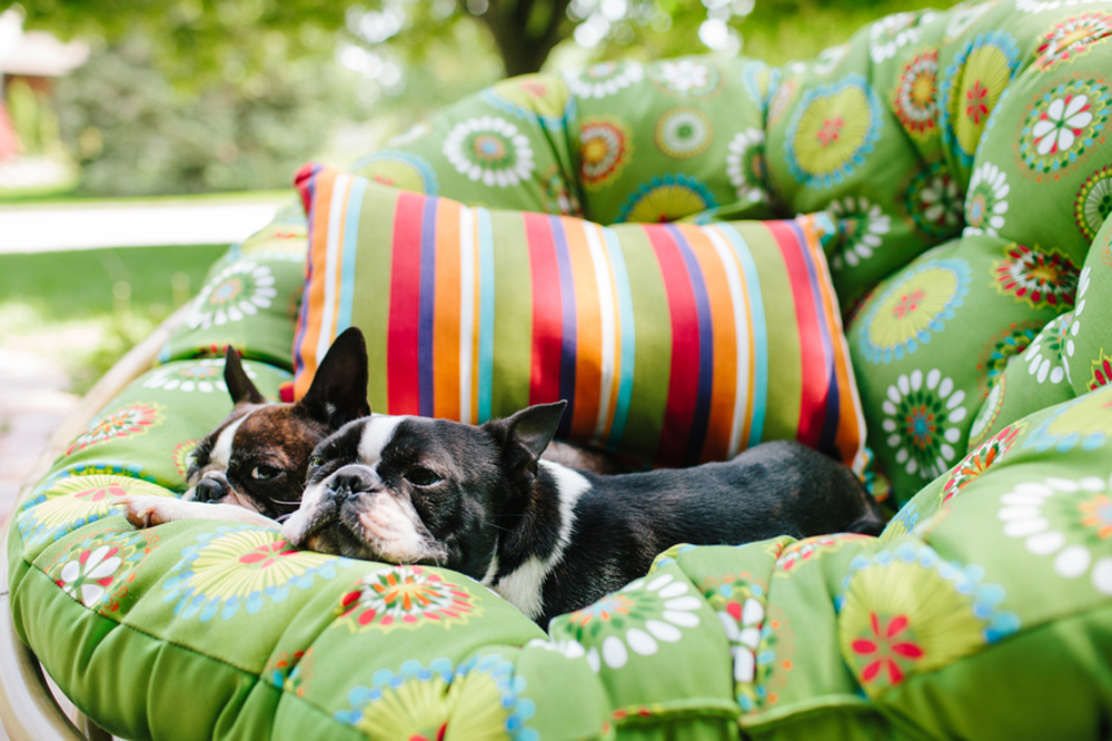 pets sitting on outdoor cushion