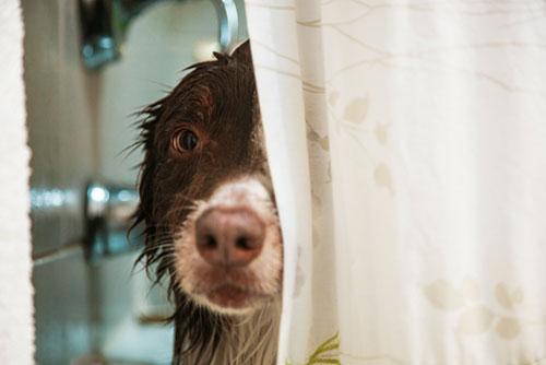 wet dog, test drive a home