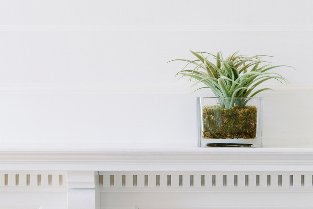 plant on tidy mantle